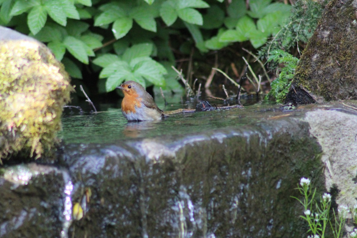Robin Takes a Bath